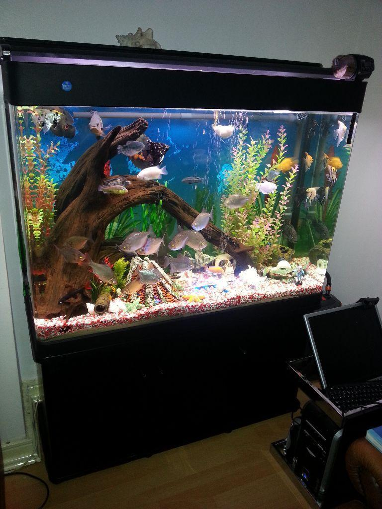 tropical set up fish tank and stand full set up in On fish tank set up