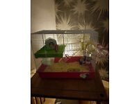 Syrian hamster 10weeks with cage etc