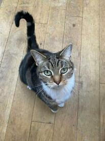 Missing cat Whitley bay