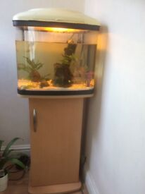 Pair of tilapia fish with 8 big babies + Fish tank and stand
