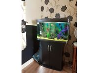 120 litre fish tank full established with fish