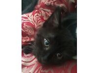 2 black cats need new homes, they are about 6 years old . No fault of their own