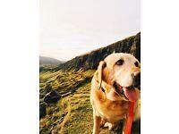 Hannie's Highland Hounds - Dog Walking Service