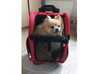 Global Pet Products PET WHEEL-AWY 4in1 carrier,back pack, car seat, bed Carrier