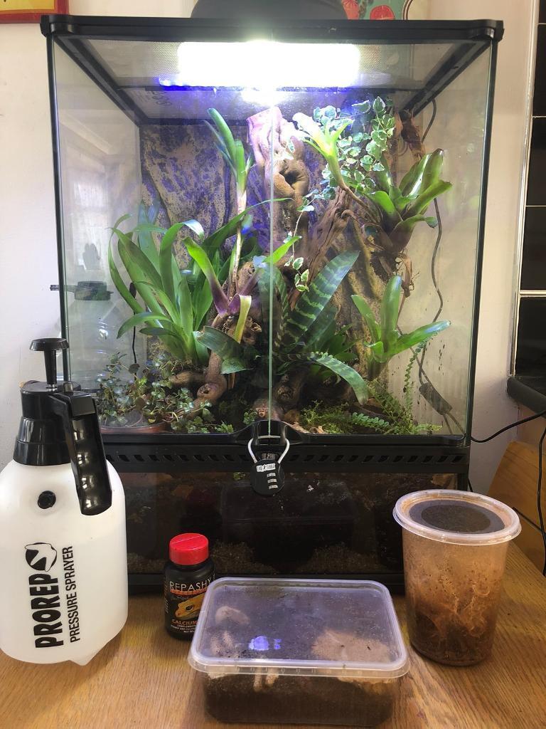 Exoterra Dart Frog Setup Terrarium Vivarium Reptile In Shirley West