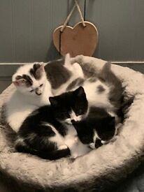 Kittens 9 weeks for sale