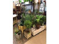 Plants ,Planters,Garden Features