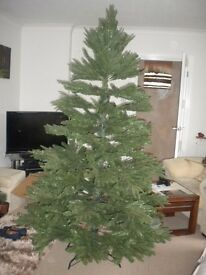 Christmas Tree 2.1 metre aspen fir. Very full and realistic.