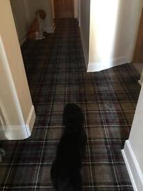 Hall carpet perhaps