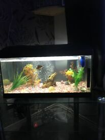 54l fish tank with Accessories