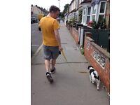 Dog Walker/sitter Croydon, Caterham, Purely, Wimbledon, Raynes Park