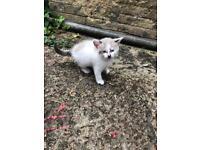 Kitten boy ready to leave in two weeks