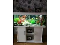 Stunning 4ft white juwel fish tank