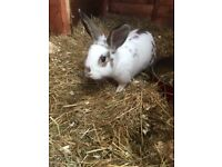 3 baby rabbits for sale very friendly