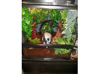 Created Gecko setup with Geckos
