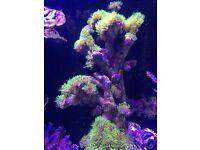 Marine live rocks, corals, and fishes for sale fish tank aquarium reef