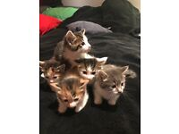 Kittens 8weeks Wembley