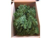 B&Q 6ft Monterey Pine Tree
