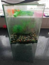 Fish tank with plants and gravel