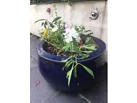Dark blue plant pot. Empty or with compost and flowers!