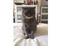 Missing Cat - Cash Reward Offered!!!!!