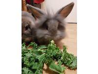 Bunny Rabbits 11 Weeks £20