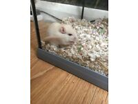 Female gerbil and cage