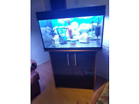 150 liter Aqua one dark wood and black gloss fish tank and stand for sale,