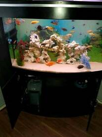 Nice big aquarium 4ft