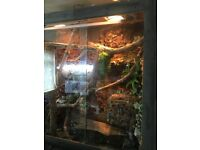 Large areboreal lizard tank