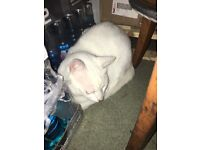 Found a white cat today.