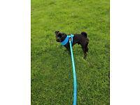 Patterdale terrier cross