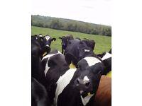 Grassland Dairy Position