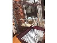 Second Hand Bird Cage With Cage Stand