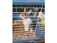 Rabbit for Adoption