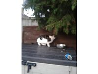 found tabby male cat