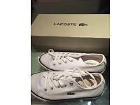 Lacoste White Trainer size 3.5