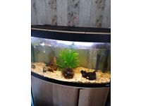 Fish tank on stand approx 900mm wide by 500 high