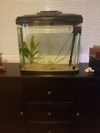 70 litre fish tank with built in filter and air pump