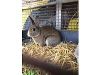Beautiful friendly male rabbit