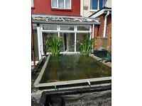 complete fish pond