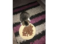Male & female kittens ready now,eating well & litter trained.