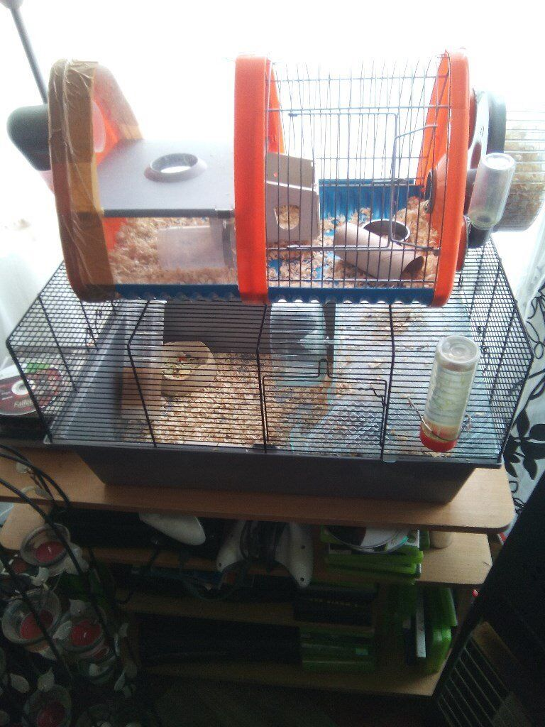 TWO HAMSTERS FULL SET UP