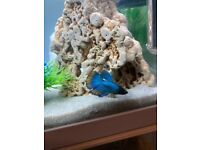 30l fish tank with filter heater bubbles machine