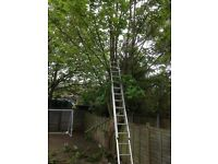 Petes tree surgeon garden clearance