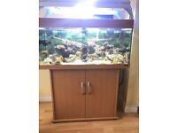 Juwel Rio 180 marine tropical fish tank with setup