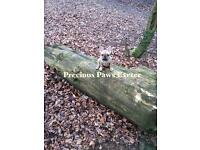 Precious Paws Exeter is a friendly, reliable and professional business based in Exeter.