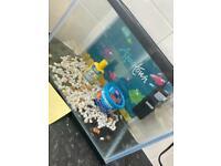 Fish tank/ filter / accessories
