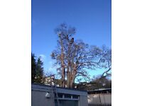 Tree removal, tree surgery, rope acces, gutter cleaning, roof maintanace