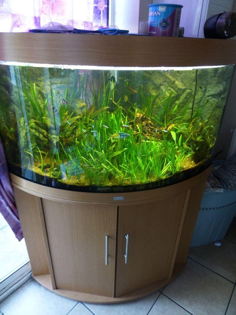 fish tank juwel aquarium trigon 190 with stand in havant hampshire gumtree. Black Bedroom Furniture Sets. Home Design Ideas
